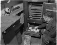 1102-2 Zes nandoe-eieren in de broedmachine in Diergaarde Blijdorp.