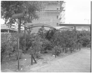 11690 Op de hoek Diergaardesingel-Kruisplein is een klein plantsoentje ingericht met gebruikmaking van plastic ...