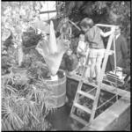 11912 Jongetje staat in de Koningskas op een huishoudtrap (die in een bassin is geplaatst) naast de grootste bloem ter ...