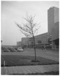 12126 Boom geplant voor de Nederlands Economische Hogeschool op complex Woudestein.
