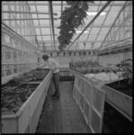 23003-4-1 Tuinbouwschool aan de Bosdreef.