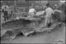 23368-2-34 Biologen onder leiding van prof. dr. L. Brongersma ontleden bij de vuilverbranding aan de Brielselaan de ...
