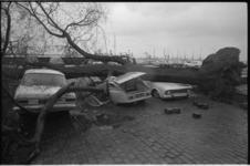 24153-3-37 Een boom die door een orkaan is geveld heeft een aantal auto's heeft geplet.