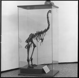 26010-1-4 Tentoonstelling van het Natuurhistorisch Museum in het dioramagebouw in Diergaarde Blijdorp.