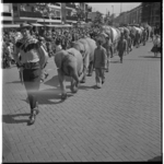 3253 Tour de ville van Circus Krone met rij olifanten in de Karel Doormanstraat,