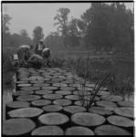 3319-3 Inrichting van de Koningshof met rij boomstammen die voetgangersbrug vormen op Floriadeterrein in Het Park