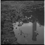 3319-4 Inrichting van de Koningshof op de wereldtuinbouwtentoonstelling Floriade in Het Park met spiegelbeeld van de ...