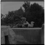 3379-2 Cameraman met tv-opnameapparatuur op verhoogd platform bij kameel in diergaarde Blijdorp.