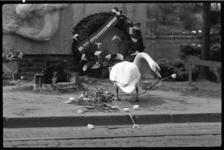 4150 Zwaan scharrelt op oorlogherdenkingsmonument aan de Noordsingel met de daar neergelegde tulpen.