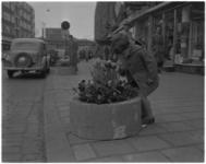 486 Een jongetje ruikt aan bloemen in bloemenbak op de Meent.