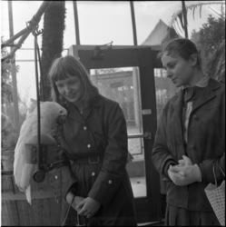 553 Meisjes afkomstig uit de grote Duitse industriecentra bezoeken onder meer Diergaarde Blijdorp.