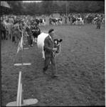 5573 Paraderen door koeien en hun begeleiders op het manegeterrein in het Kralingse Bos.