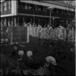 569 Flamingo's op de Lijnbaan ter gelegenheid van het 100-jarig bestaan van de Diergaarde.