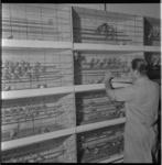 883-2 Man bij gestapelde kooien met vogeltjes.