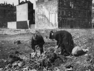 1977-3128 Grondstoffen zoeken voor bereiding van voedsel in de wijk Kralingen.
