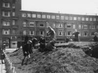 1977-3633 Op het Mathenesserplein wordt een schuilkelder gesloopt vanwege het hout.