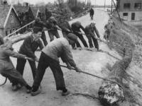 1977-3782 Op de Lekdijk bij Schuagt te Lekkerkerk worden bomen gekapt voor het maken van houten zolen.