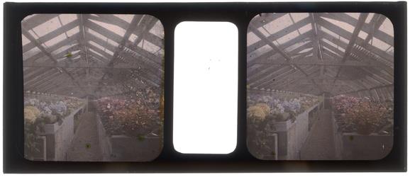 26-3-33 Stereofoto, autochroom, van een plantenkas met bloemen, mogelijk in de Rotterdamsche Diergaarde.