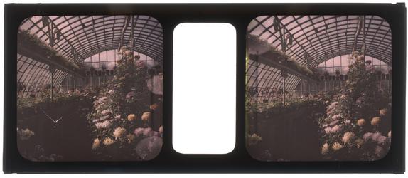 26-3-35 Stereofoto, autochroom, van bloemen en planten in een kas, vermoedelijk in tuin van de familie Stahl - Van ...