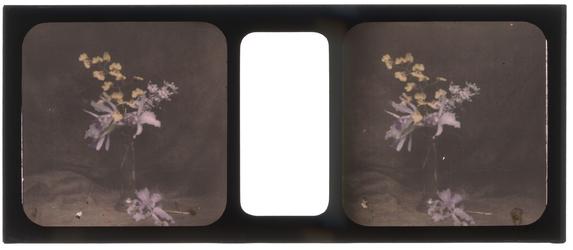 26-6-40 Stereofoto, autochroom, van een bos bloemen.