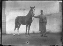 2007-2565-02 Een paard en zijn begeleider op de wagenplaats van de firma Tromp en Rueb, Azijnmakerij 'De Dubbele ...