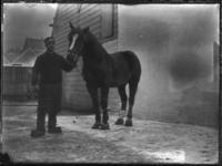 2007-2565-04 Een paard en zijn begeleider op de wagenplaats van de firma Tromp en Rueb, Azijnmakerij 'De Dubbele ...