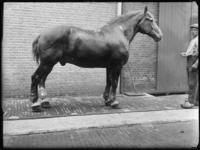2007-2565-07 Een paard en zijn begeleider op de wagenplaats van de firma Tromp en Rueb, Azijnmakerij 'De Dubbele ...