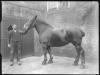 2007-2565-10 Een paard en zijn begeleider op de wagenplaats van de firma Tromp en Rueb, Azijnmakerij 'De Dubbele ...