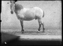 2007-2565-11 Een paard op de wagenplaats van de firma Tromp en Rueb, Azijnmakerij 'De Dubbele Grieksche A' aan de ...