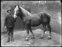2007-2565-12 Een paard en zijn begeleider op de wagenplaats van de firma Tromp en Rueb, Azijnmakerij 'De Dubbele ...