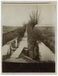 1969-253 De Hoekplankjes in de Nieuw Mathenesse-polder met op de achtergrond de Mathenesserdijk.
