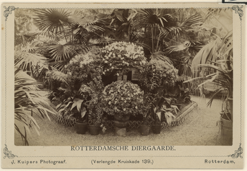 XXIII-106-02-5-a Plantenserre in de Rotterdamse Diergaarde aan de Diergaardelaan.