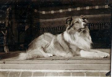 2000-1101-175 Serie van 237 fotokaarten, grotendeels vervaardigd door Louise Laboyrie, huishoudster (pastoorsmeid) bij ...