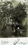 2000-1101-71 Serie van 237 fotokaarten, grotendeels vervaardigd door Louise Laboyrie, huishoudster (pastoorsmeid) bij ...