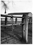 1975-129 Restanten van de laatste veemarkt op de Veemarkt. Op de achtergrond, de toren van de kerk, de Heilige ...