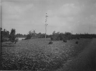 IX-1633 Gezicht in de Kralinger Hout, aan het Kralingse Bos.