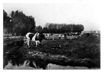 IX-173-01 Gezicht op een weide langs de Beukelsdijk nabij Overschie.