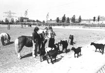 2004-6854 De Maeterlinckweg met kinderboerderij.