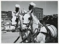 1970-2629 Twee paarden met koets staat klaar bij de Hugo de Grootstraat op het terrein van de voormalige Jaminfabriek ...