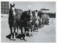 1970-2630 Vier paarden met een koets en biertap van de firma Heineken staat klaar bij de Hugo de Grootstraat op het ...