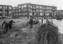 XXXIII-625-2 De oogst van rogge aan de Vroesenlaan.